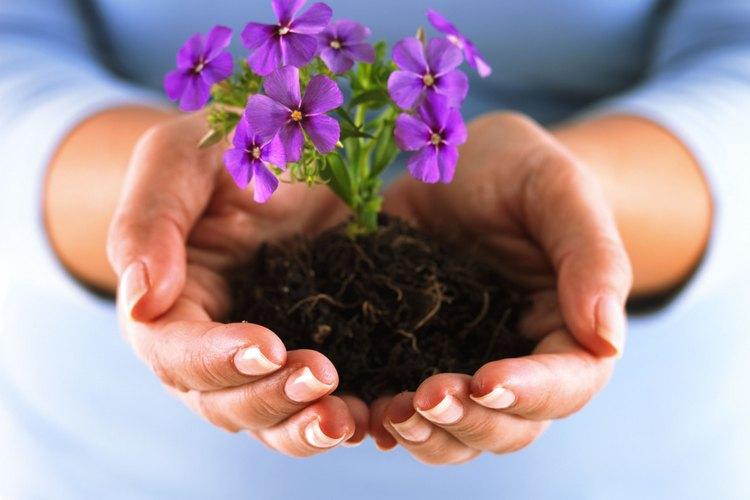 Las anuales son plantas efímeras.