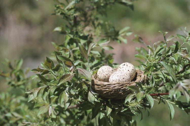 Las aves construyen nidos para sus huevos.