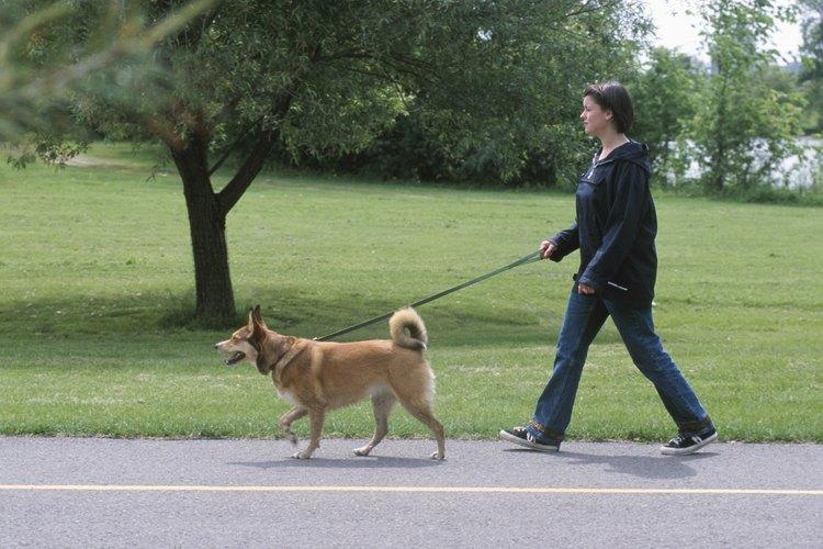 Más ejercicio puede ayudar a un perro a defecar.