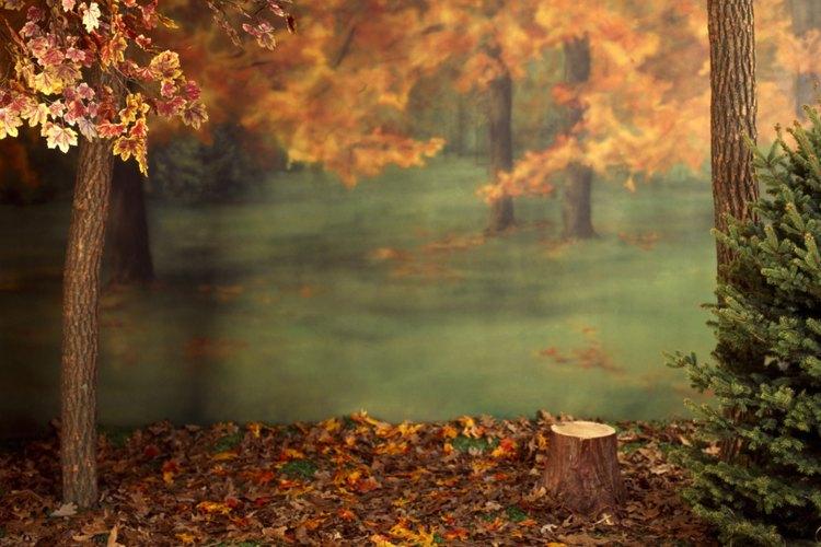 El otoño era un tema favorito de los poetas románticos.