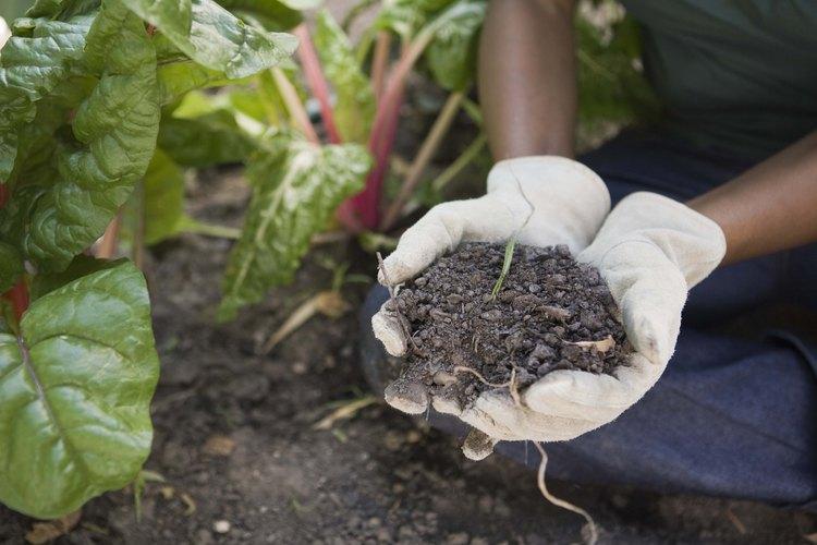La preparación adecuada de la cama de siembra ayuda a obtener un jardín vegetal productivo.