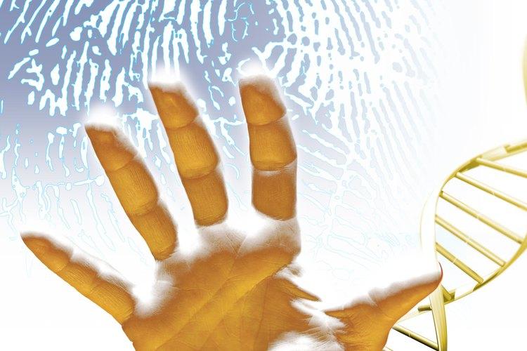 A diferencia de las huellas digitales, el ADN de las huellas digitales de una persona coinciden con el de los dos padres.
