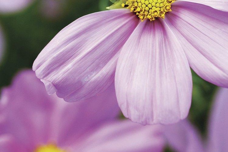 Presentes en la naturaleza, el amarillo y el lavanda se complementan mutuamente.