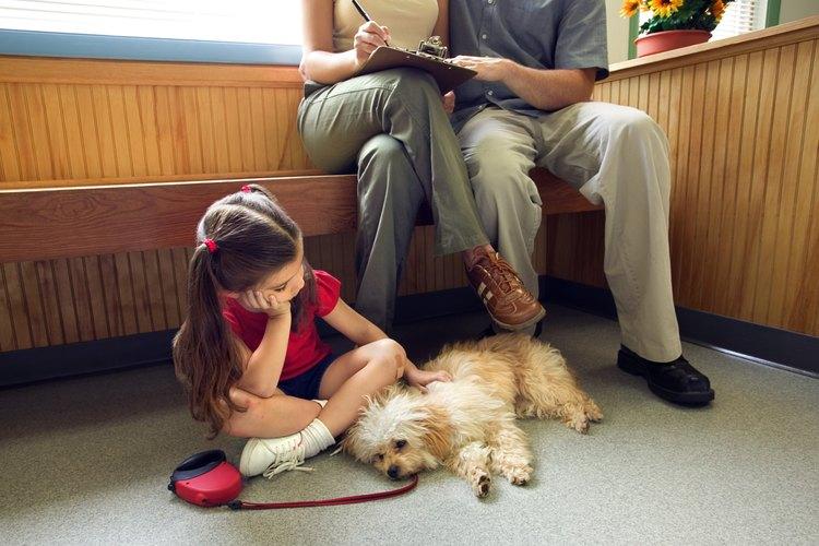 Perro enfermo en el consultorio veterinario.