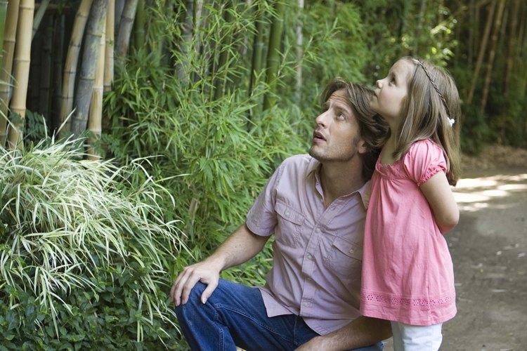 Conoce los efectos del bambú en tu casa y vecindario antes plantarlo.