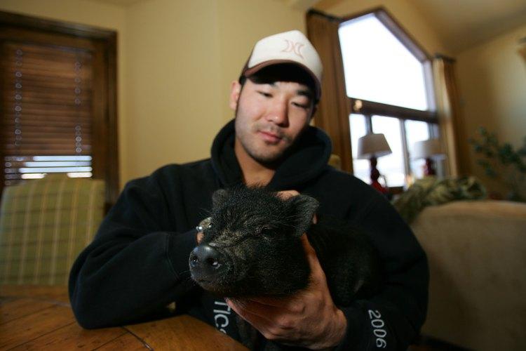 Los cerdos son animales muy inteligentes que pueden ser entrenados para ir al baño.