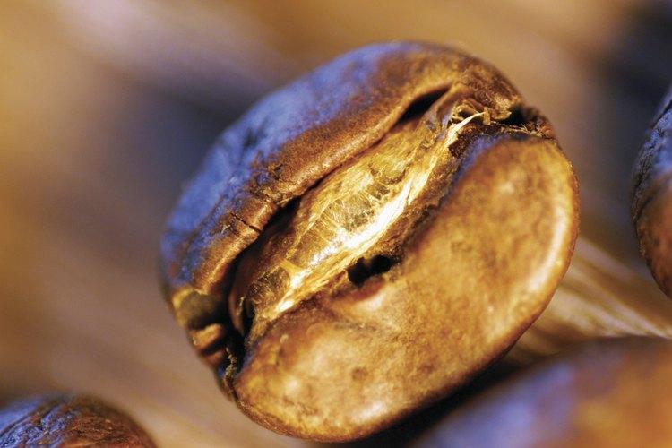 Puedes comprar granos de cacao tostados o tostarlos tú mismo en el horno.