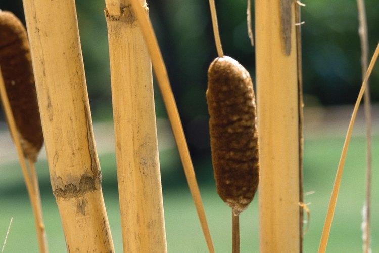 No necesitarás un jarrón pesado para exhibir las cañas de bambú más pequeñas.