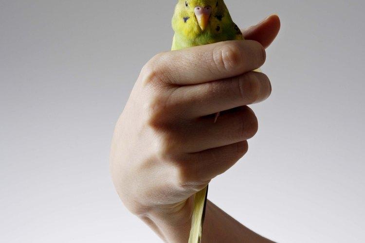 Si un pájaro vuela en tu departamento o casa, tendrás que actuar rápido para sacar el ave.