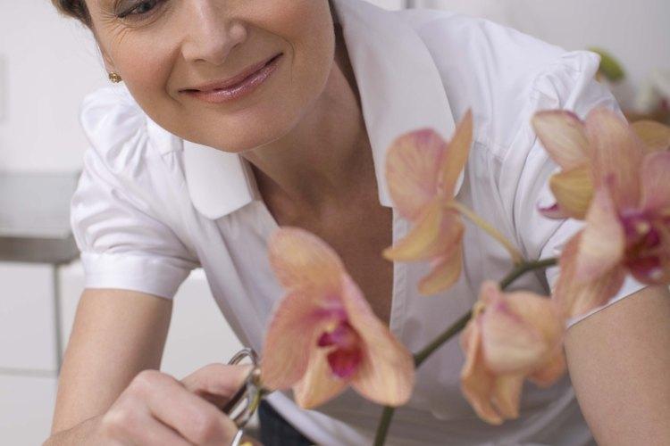Recorta las orquídeas cuando sus flores hayan muerto para fomentar un nuevo crecimiento.