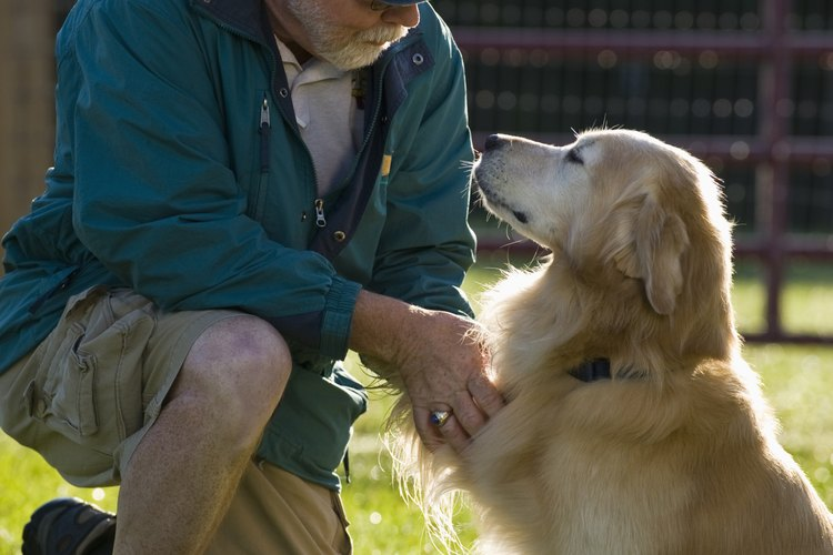 Inspecciona las patas de tu perro regularmente.