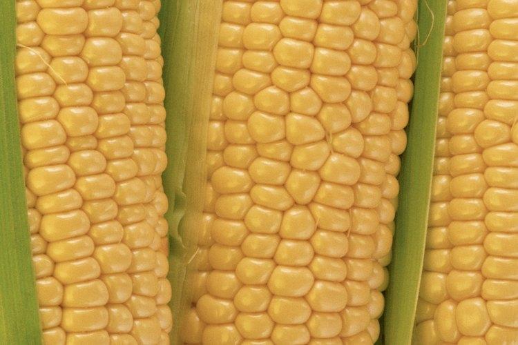 Los almidones, como el maíz son buenas fuentes de etanol.