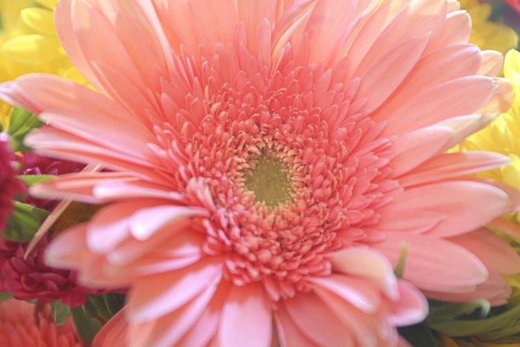 El nombre común de esta especie de clavel es China pinks.
