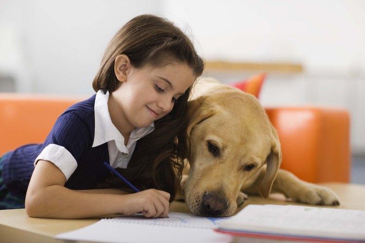 Enseñar a los niños sobre los animales domésticos les aydua a relacionarse con las mascotas tales como los perros.