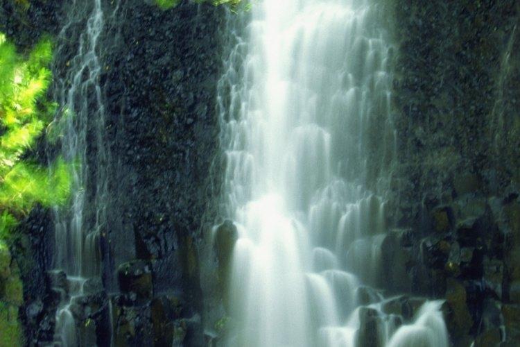 El Guanacaste es el árbol nacional de Costa Rica.