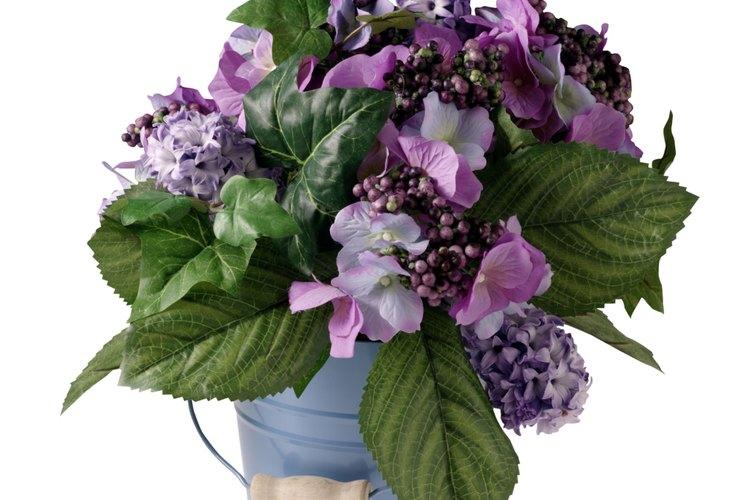 Las hortensias en maceta pueden volver a florecer con los cuidados adecuados.