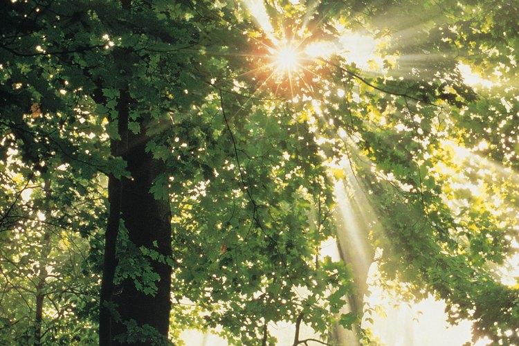 La luz solar es uno de los elementos esenciales de la vida de las plantas.