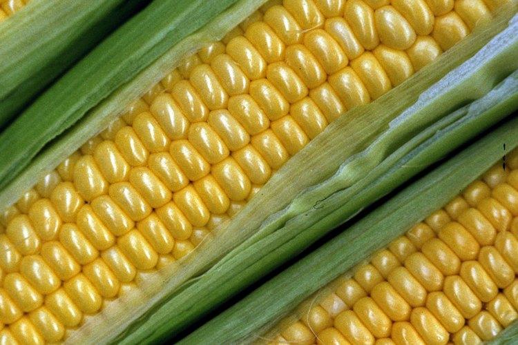 La harina de maíz es un polvo blanco hecho con el endospermo, la parte almidonada del grano de maíz.