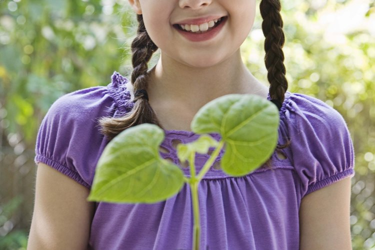Germinar semillas construye el concepto más grande de ciclos de vida.