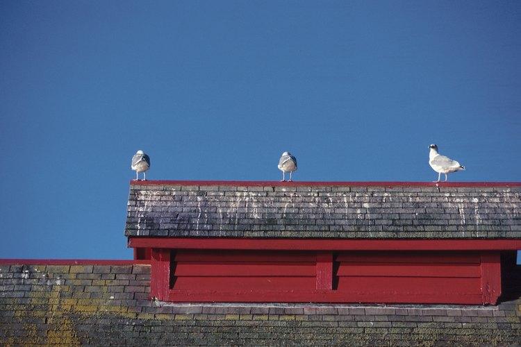 Los pájaros a menudo dejan grandes desastres alrededor de las casas que hacen necesario tomar acción.