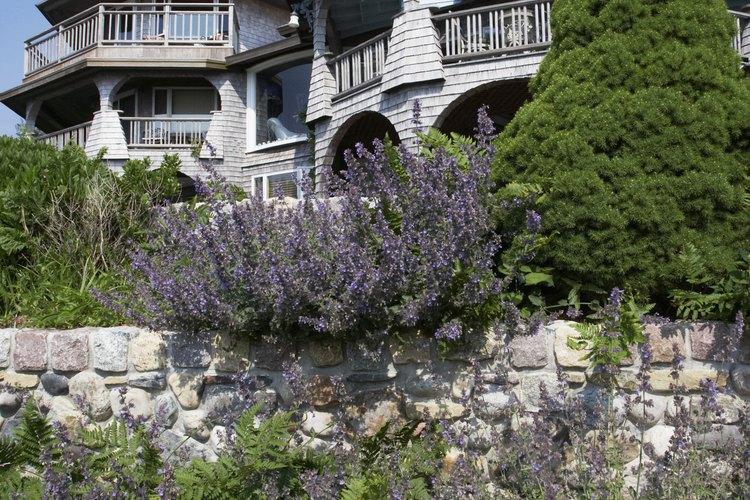 Una pared baja empedrada, compuesta de adoquines, en el jardín de una casa de Cape Cod.
