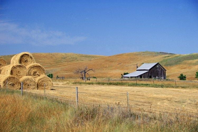 El Medio Oeste se ha convertido en el centro de la agricultura estadounidense.