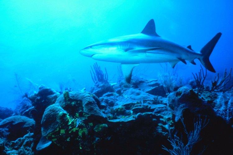 El Shark Reef en el hotel Mandalay Bay es un atractivo no sólo para adolescentes, sino para toda la familia.