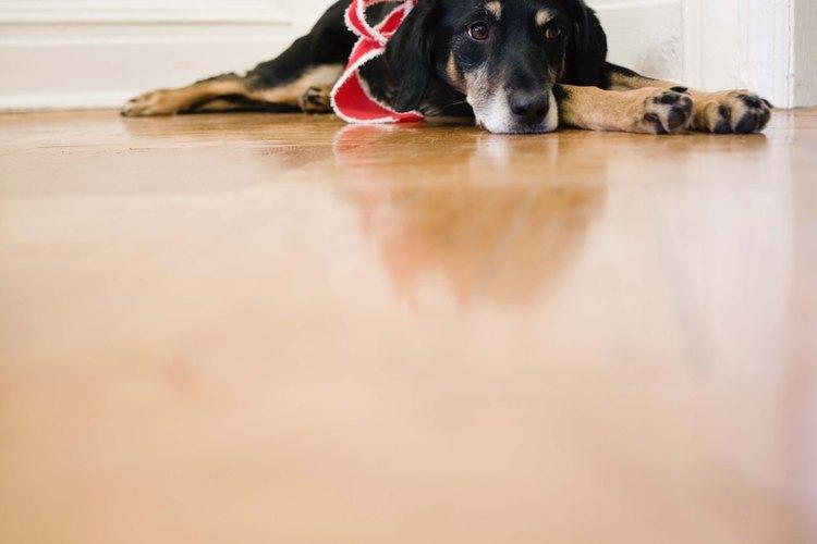 Los perros pueden orinar en zonas ocultas de tu hogar.