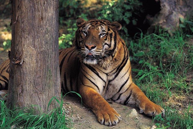 En el Zoológico Nacional una señal que te indicará el camino para continuar con una larga carrera.