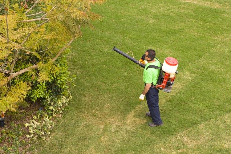 Las plantas y los vegetales son susceptibles a los insectos y a otras plagas.