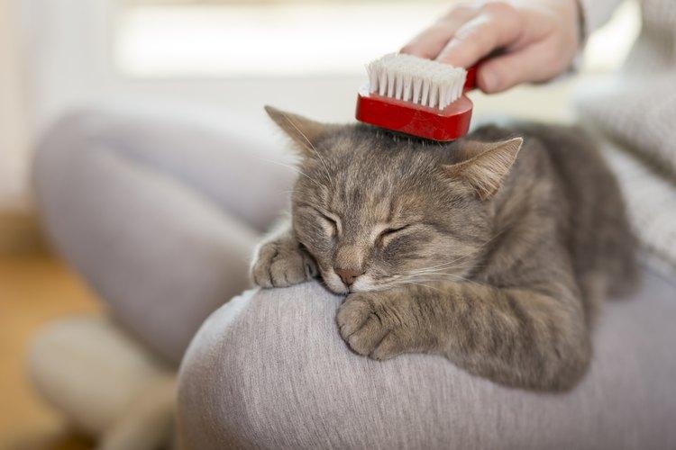 Cuida la piel de tus mascotas.