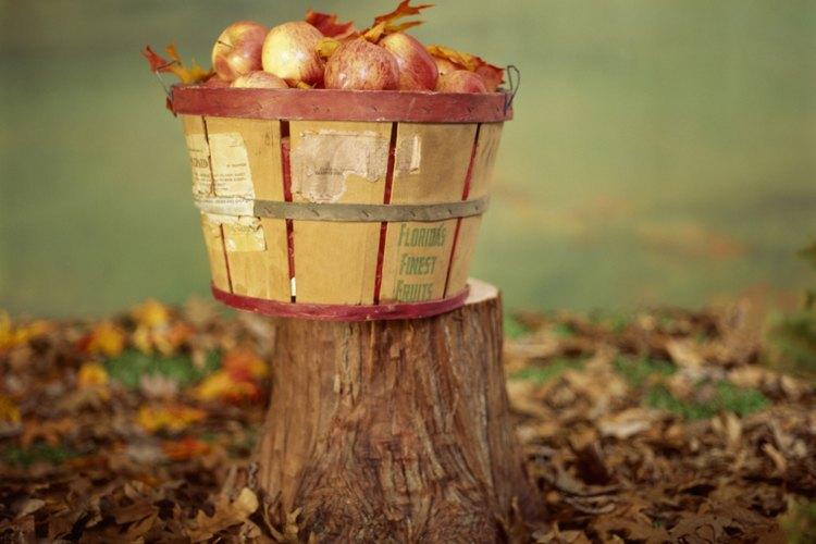 Quita el tocón de un árbol con alguno de varios métodos.