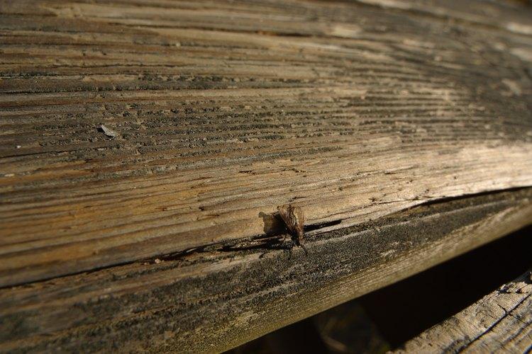 Las moscas pueden ser una molestia en tu casa o alrededor de ella.
