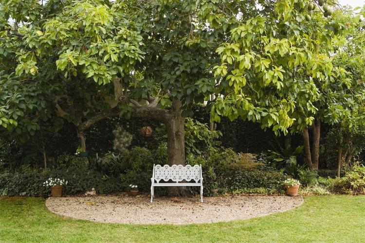 Remata los árboles para darles forma para que sean cortos y anchos en lugar de altos y delgados.