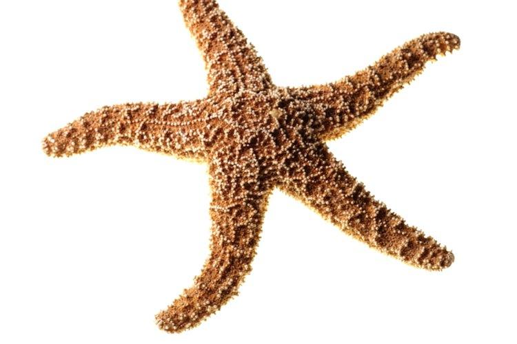 → Cómo conservar una estrella de mar   Geniolandia
