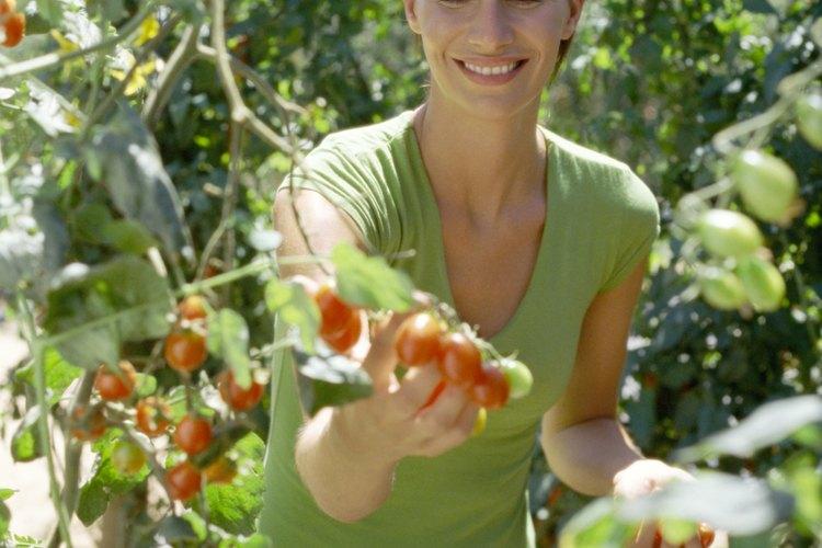 La agricultura orgánica es una manera saludable de introducir a los niños a los alimentos nutritivos.
