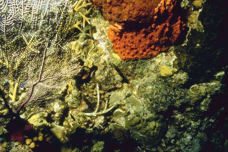 En el fondo del océano está la evidencia.