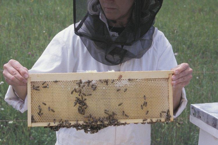 Los apicultores eliminan los productos de los panales artificiales.