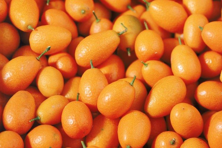 Los árboles suelen ser comprados como plantines, pero puedes cultivar tu propio quinoto usando semillas.