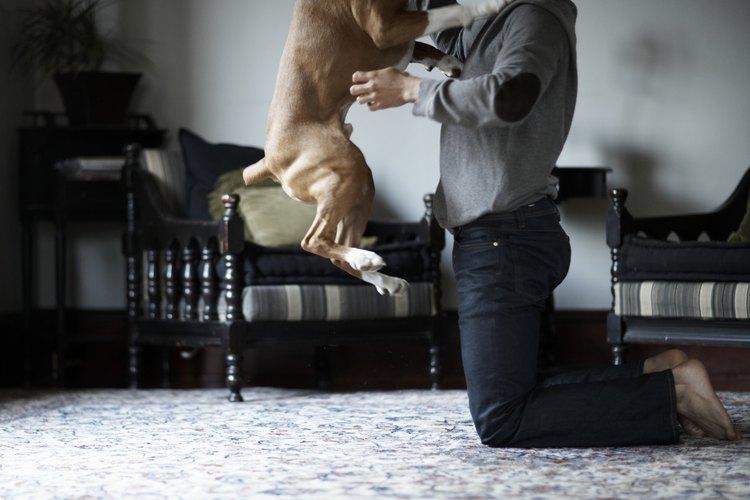 Muchos veterinarios recomiendan el uso de melatonina en perros, en especial si son hiperactivos o se sienten incómodos en las visitas al veterinario.