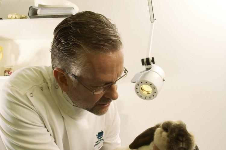 Los avances ténologicos hacen que el veterinario pueda ir a examinar a los animales en el lugar donde se encuetran.