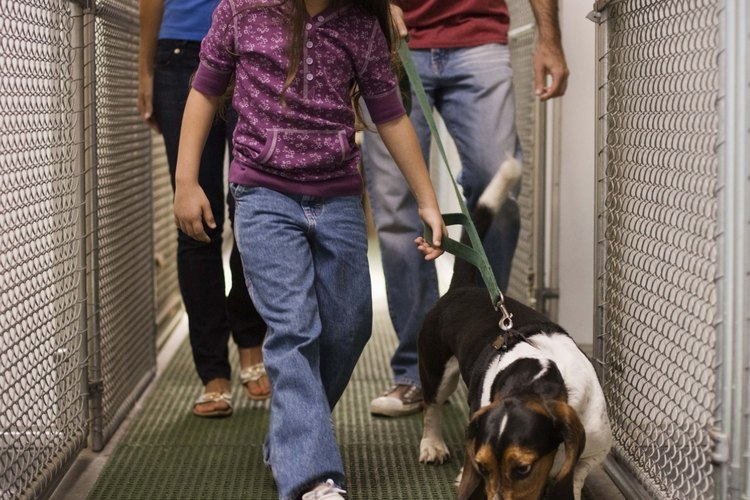 El cuidado gentil de una mascota enseña lecciones para toda la vida.