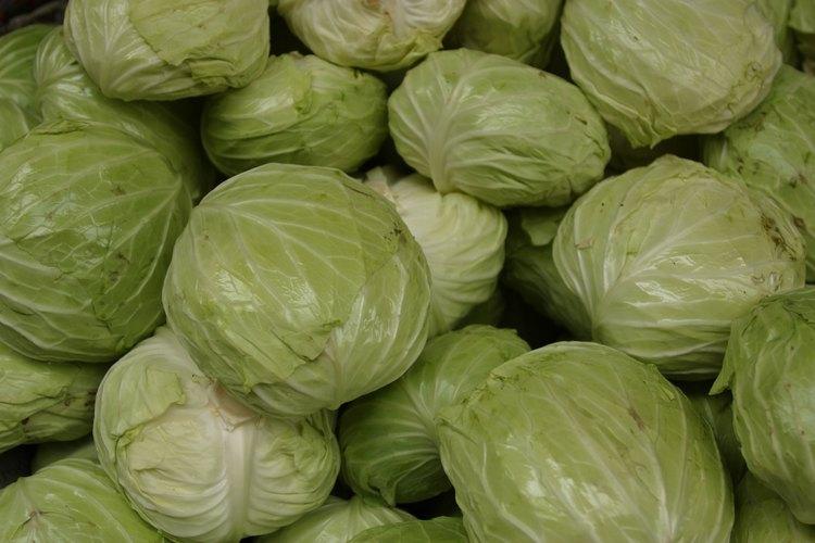 Los repollos son una verdura barata y saludable