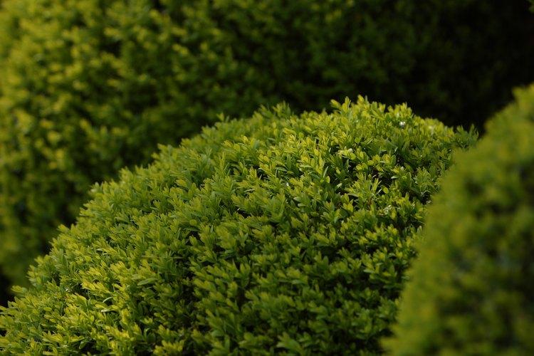 Mantén los setos y arbustos del paisaje con una apariencia prolija y saludable con una poda regular.