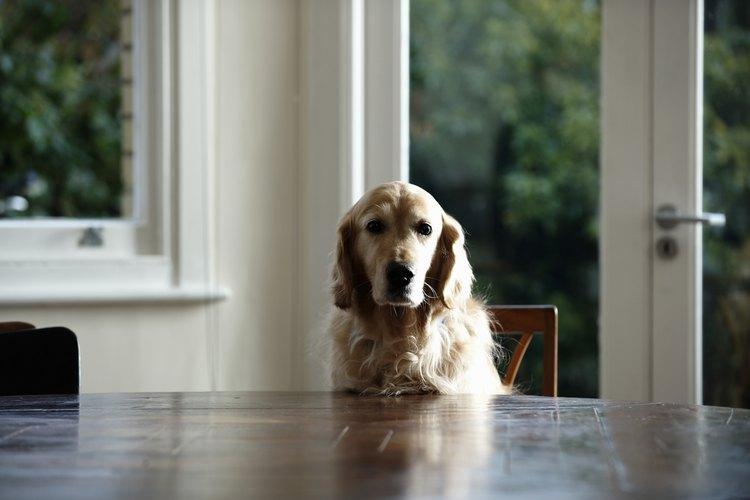 """No alimentes a tu perro con sobras de tu comida, ya que el tipo equivocado de """"comida humana"""" podría hacerle mal."""
