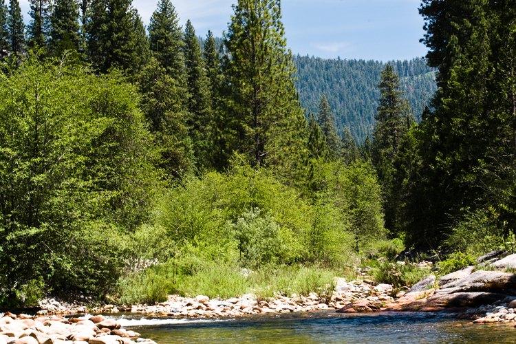 Toma un descanso en el arroyo que corre justo a lo largo del campamento.