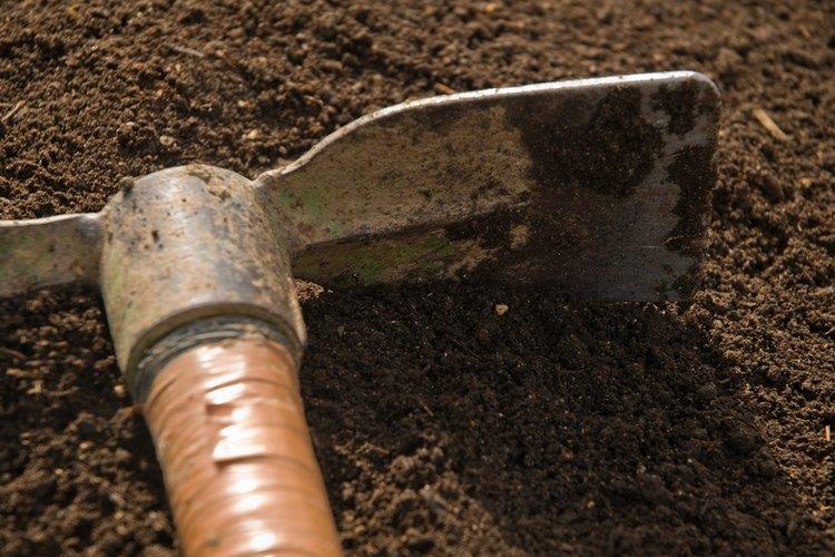 Trabaja las 4 a 6 pulgadas (10,16 a 15,24 cm) superiores del suelo con un azadón o pala.