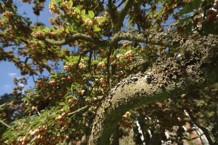 Ramas de árbol de roble con flores.