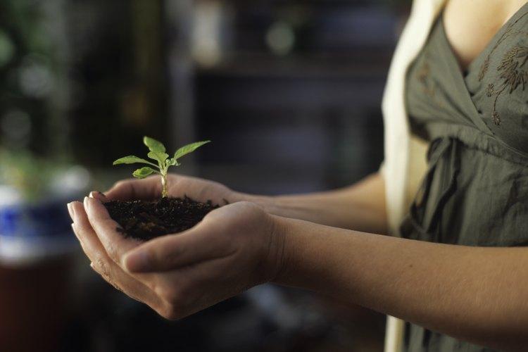 Todas las plantas productoras de semillas comienzan su vida como una semilla.