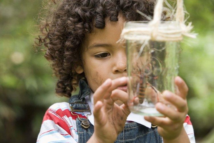 Explora el mundo de los insectos con tu hijo.